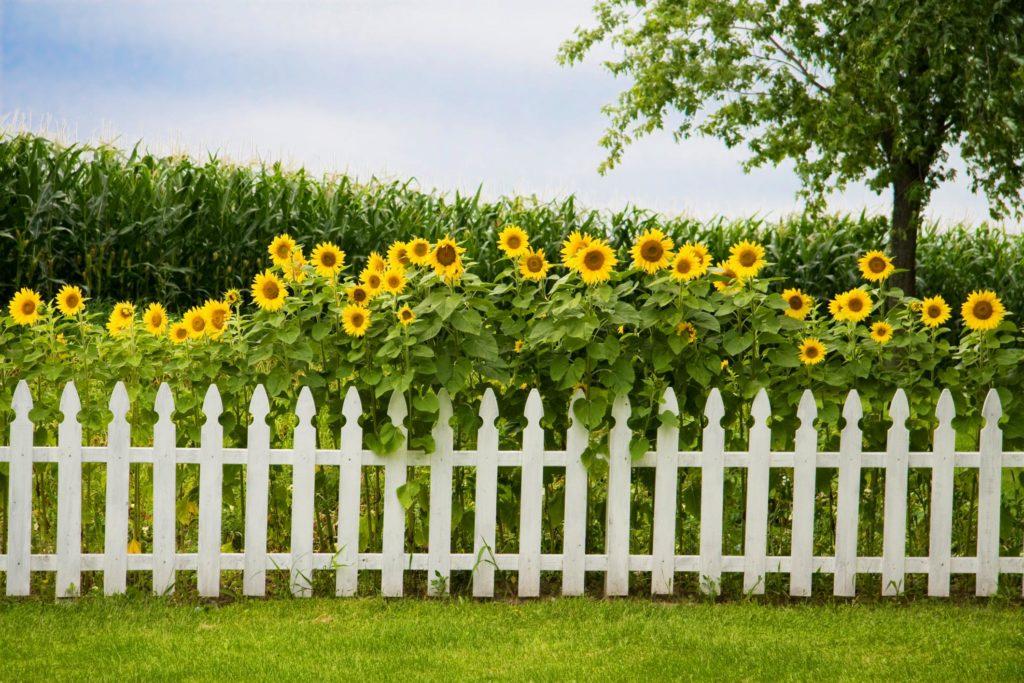 custom white viny fences